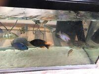 Various Stunning Tropical Fish