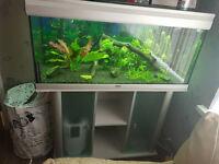 200l Fish tank,Fish , Accessories