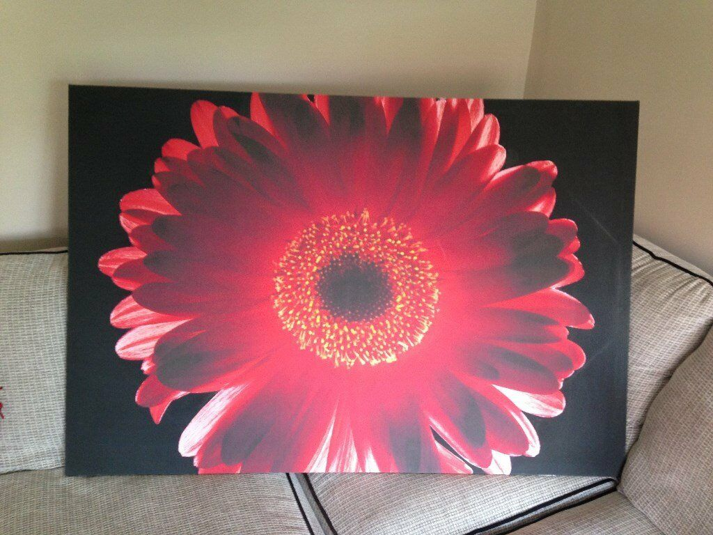 """Red flower on black background picture. 46"""" x 31"""""""