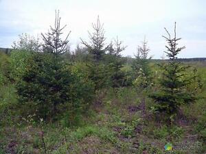 200 000$ - Terre à bois à vendre à St-Sylvestre