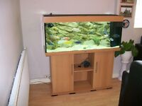 JEWEL fish tank 4ft includes cabinet stand and Malawi African cichlid fish.
