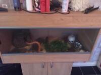corn snake and full set up