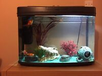 50 litre Fish tank with everything