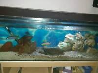 Fish tunk full set