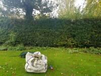 Hedge cuttin