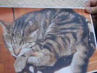missing tabby cat,grange estate gosforth