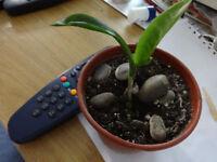 Plants for swap