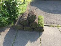 Six rolls of turf