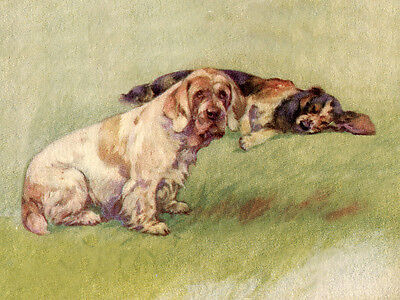 CLUMBER SPANIEL & COCKER SPANIEL CHARMING DOG GREETINGS NOTE CARD DOGS IN FIELD