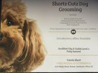 Shortz Cutz Dog Grooming from the comfort of my home, find us on fb
