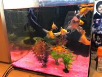 COOLWATER FISHES + TANK + SUB + PUMP *SALE*