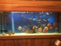 Tropical fish (discus not for sale)
