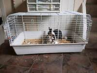 2 rabbits 1 english 1 dutch plus cage