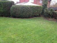 Hedge Trimming Services (Belfast,lisburn)