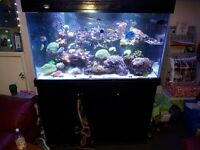 4ft marine fish tank aquarium