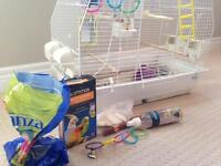 Parakeet/Budgie and cage