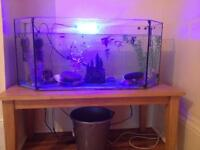 3 1/2 foot tank with 36 fish