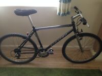 Adult Bike - Great Condition