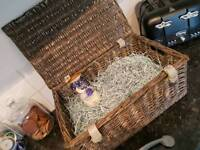 Wicker hamper picnic basket with free Whittard Tea