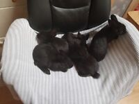YOUNG RABBITS LOOKING FOR NEW GOOD HOMES
