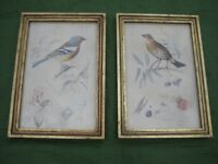 Chaffinch and Thrush Prints on 1914 and 1910 Postcard from USA Background by Gisela Graham -£10 each