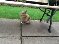 I have baby rabbits for sale £10 Ech local pickup only