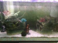 Fish tank large ship
