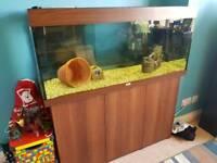 4ft Juwel Rio 240 fish tank