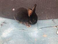 Baby Rabbits £20