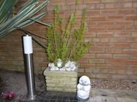 Garden stone pot with plant and ornaments