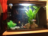 Fish, fish tank and equipment.