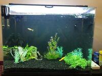 100L Aqua One Aquarium