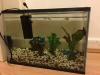 25L fish tank and 3x Danio fish free to a good home