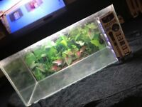 Fish tank with built in light comes with brand new heater 40 quid 07938190223