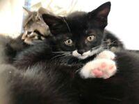 Adorable kitten needs a lovely home