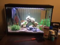 70 l Tropical fish tank/accessories and fish