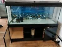 Aquarium 4 ft with black stand