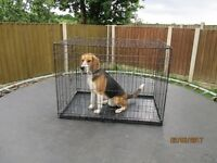 Resilient Large Metal Dog Cage, 2 doors also folds flat with carry handle.