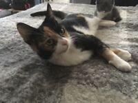 Loving Lola to good home