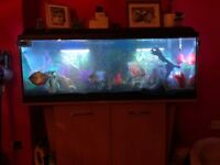 4foot tank for sale **** NO FISH****