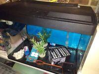 Fish tank glass 100 ltr panoramic views (no ugly frame)