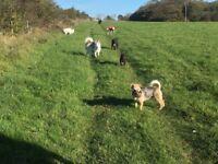 Bertie's walks Dog grooming service