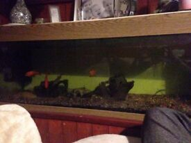 Large fish tank with pumps