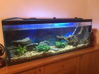 Stunning 4ft fish tank with oak side board complete set up