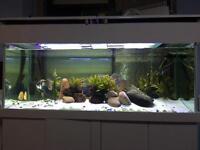Fish Tank 5ft x 2ft x 2ft