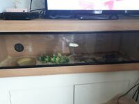 Tame corn snake for sale with Vivarium