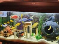 130l fish tank with fish and stand