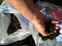 Organic, Home Composted Top Soil.
