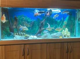 Fish set up for sale