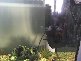 Fish need rehoming FREE